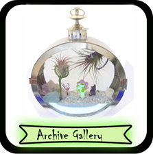 Archived Galleries of Terrariums